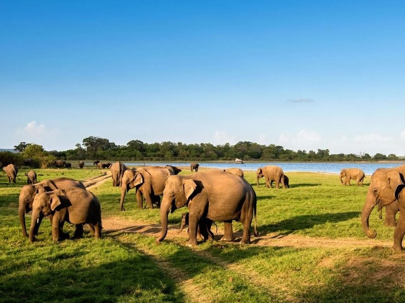 Minneriya National Park   Places to Visit near ancient rock fortress