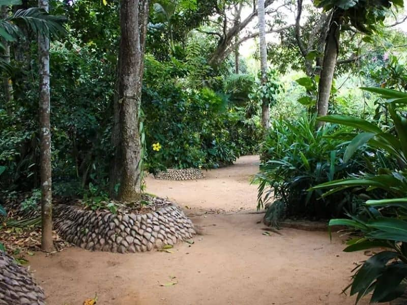 Spice Garden Inamaluwa   Places To Visit While You Are In Sigiriya